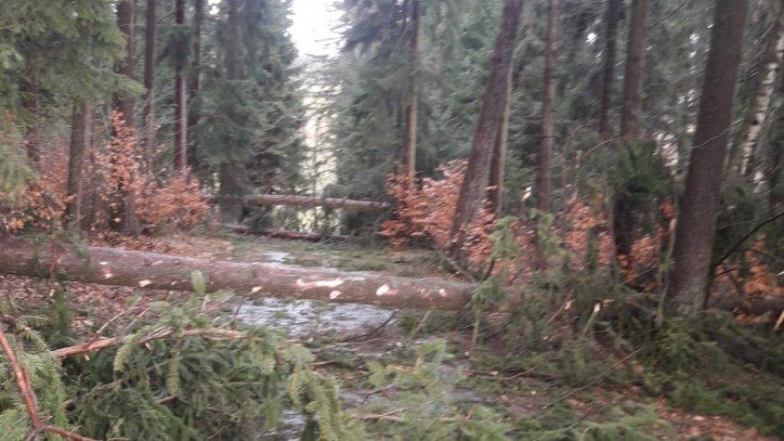 Orkan Sabine fegte auch über Sprinzenstein und Sarleinsbach